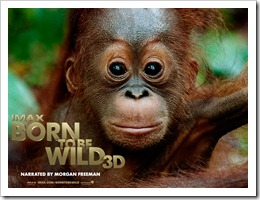 Born_to_be_Wild_Wallpaper_1_800
